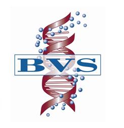 BVS_Capture.png